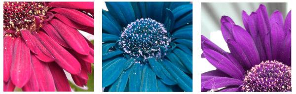 Flower idea #2