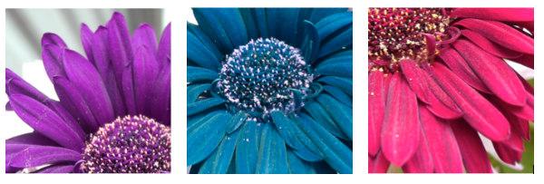 Flower idea #3