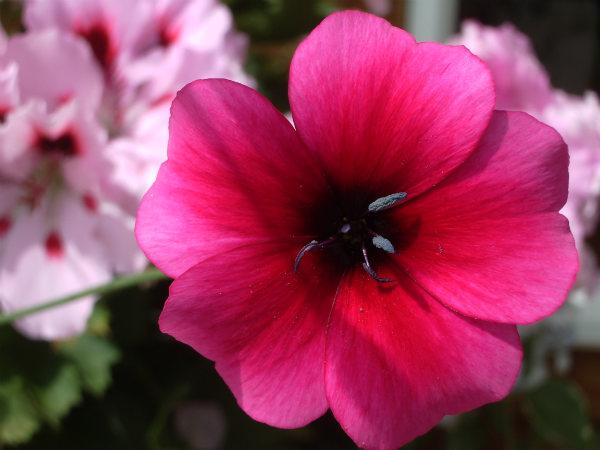 photo Mum's flower