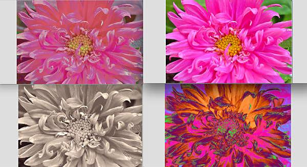 All four (closeup)