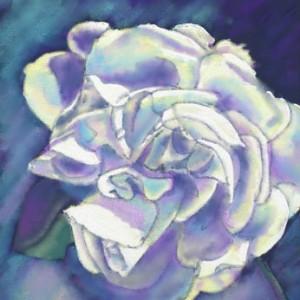 White Rose chalk pastel drawing - 600pixels © Dana Batho